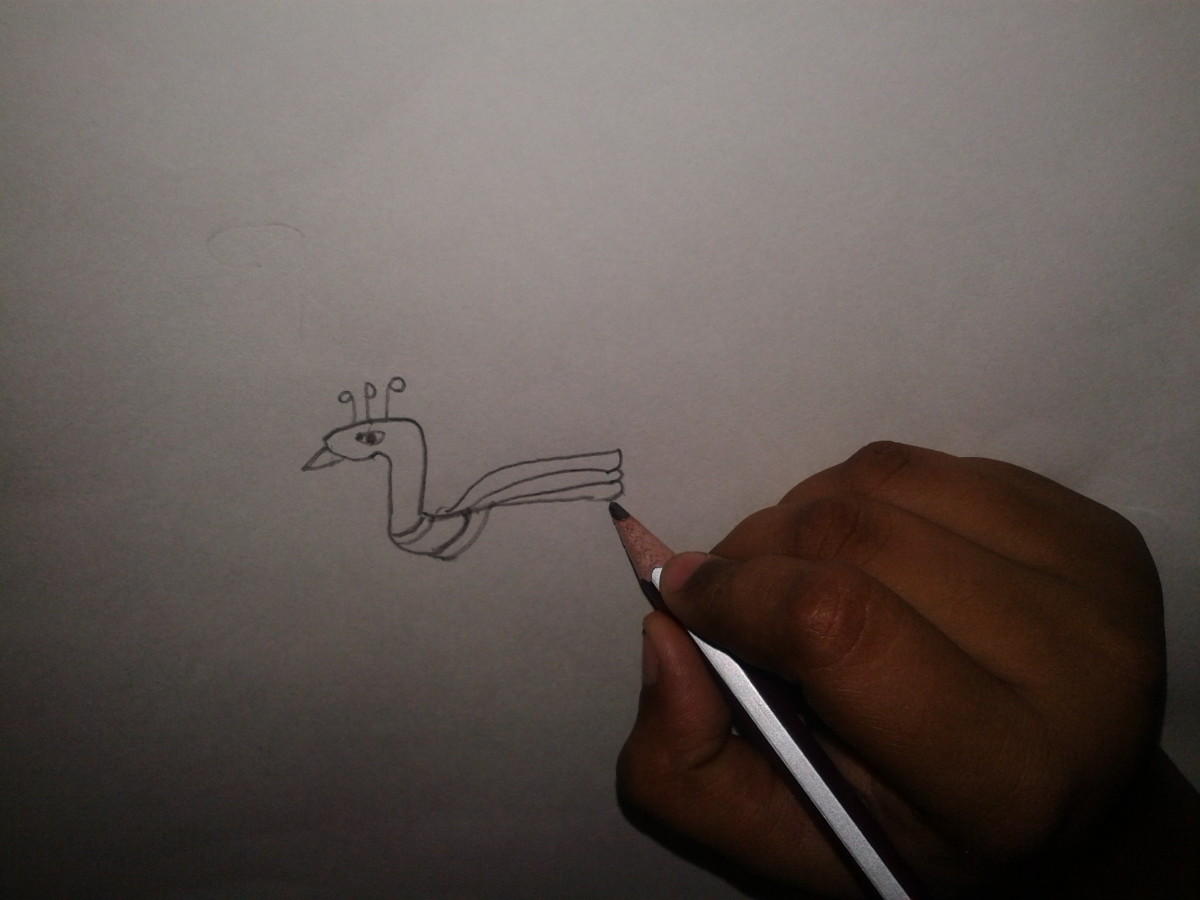 Drawing a peacock