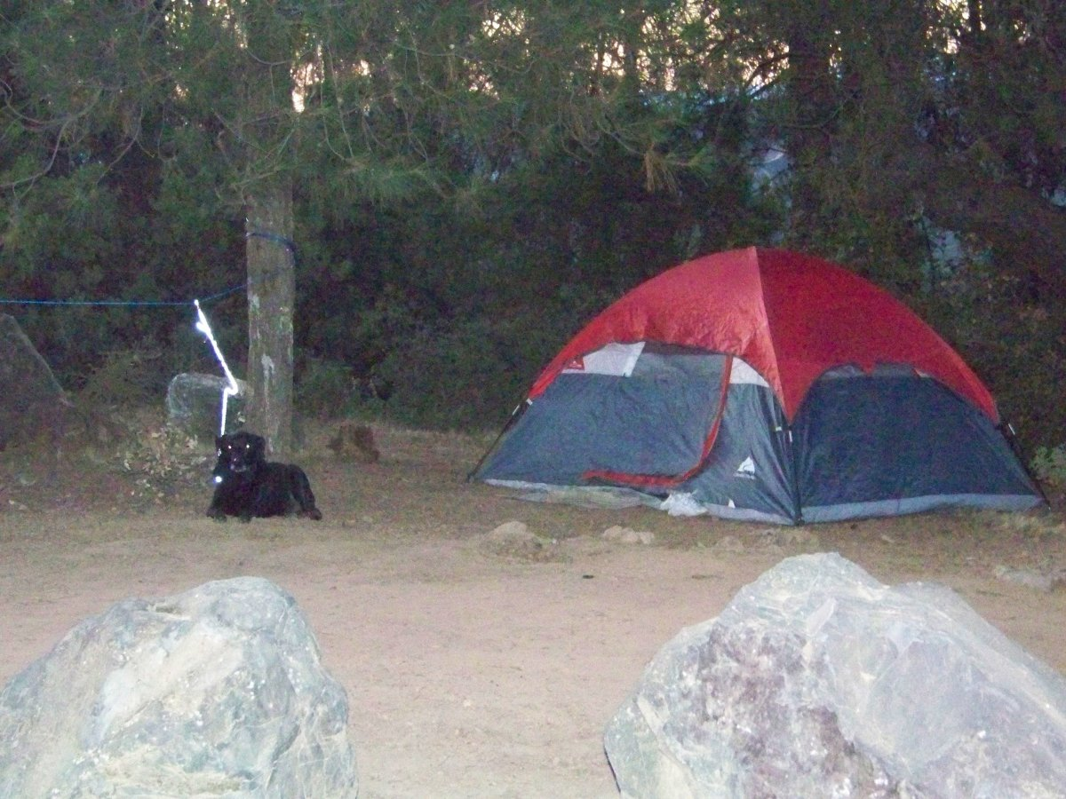 Pets area allowed on leash - for their protection as well as for the protection of other campers.  Predators on Cow Mountain include mountain lions and rattlesnakes. Both can kill dogs.