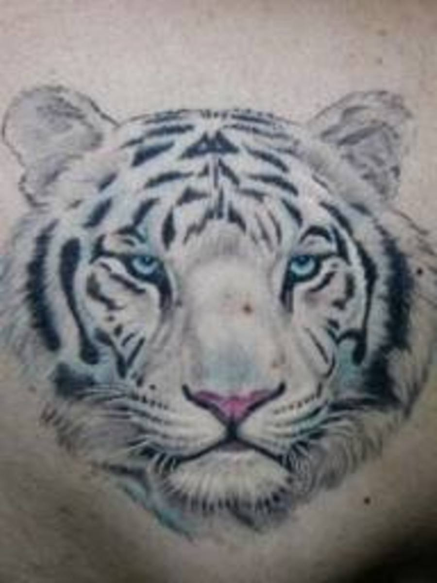 White Tiger Tattoo Designs-White Tiger Tattoo Ideas-White Tiger Tattoo Meanings And Tattoo Pictures