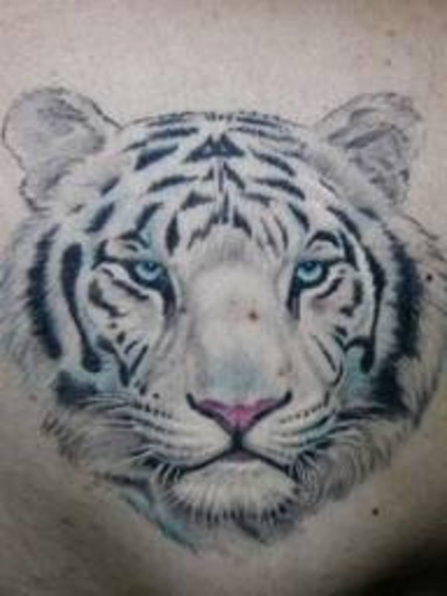 White Tiger Tattoo Designs White Tiger Tattoo Ideas White Tiger