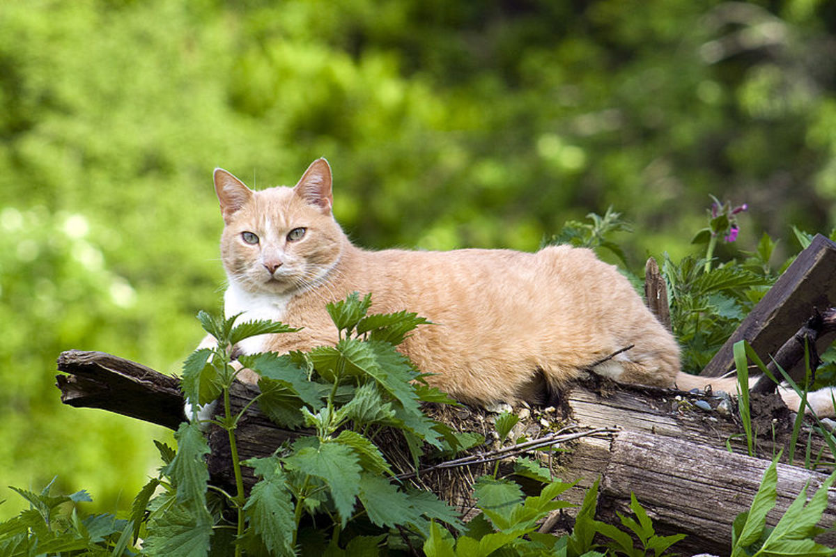 Cat Ages in Human Years and Other Facts About the Feline Lifespan