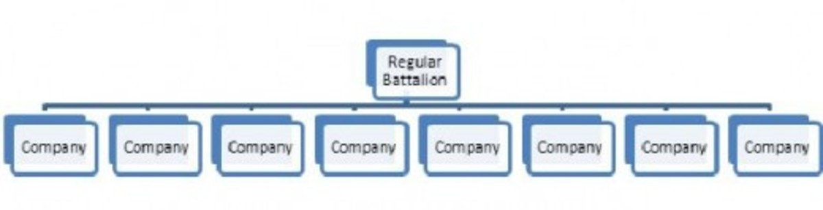 An example of the structure of a U.S. Regular Battalion composed of 8 Companies as per the new U.S. Regular Regiment organization.