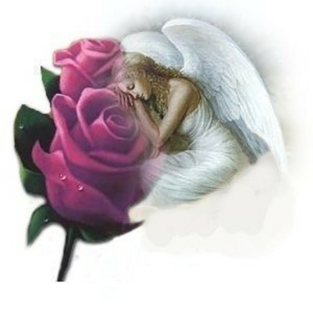 Myangel's Clipart » Religious » Angel in rose