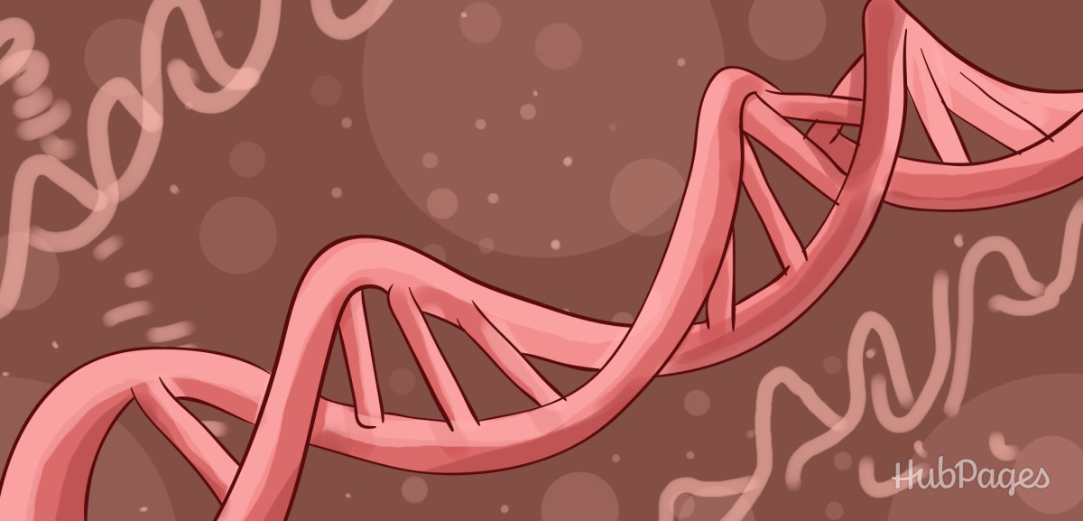 role of genes in determining the Find out how genes work genes play an important role in determining physical traits — how we look —and lots of other stuff about us.