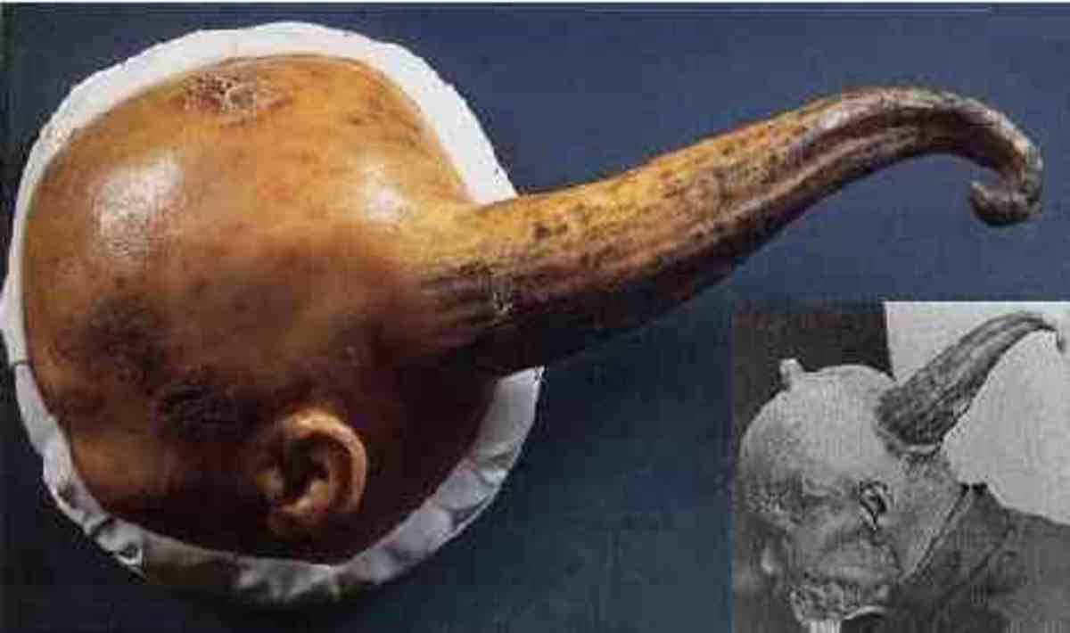 Chinese mans horn was measured then molded into wax.