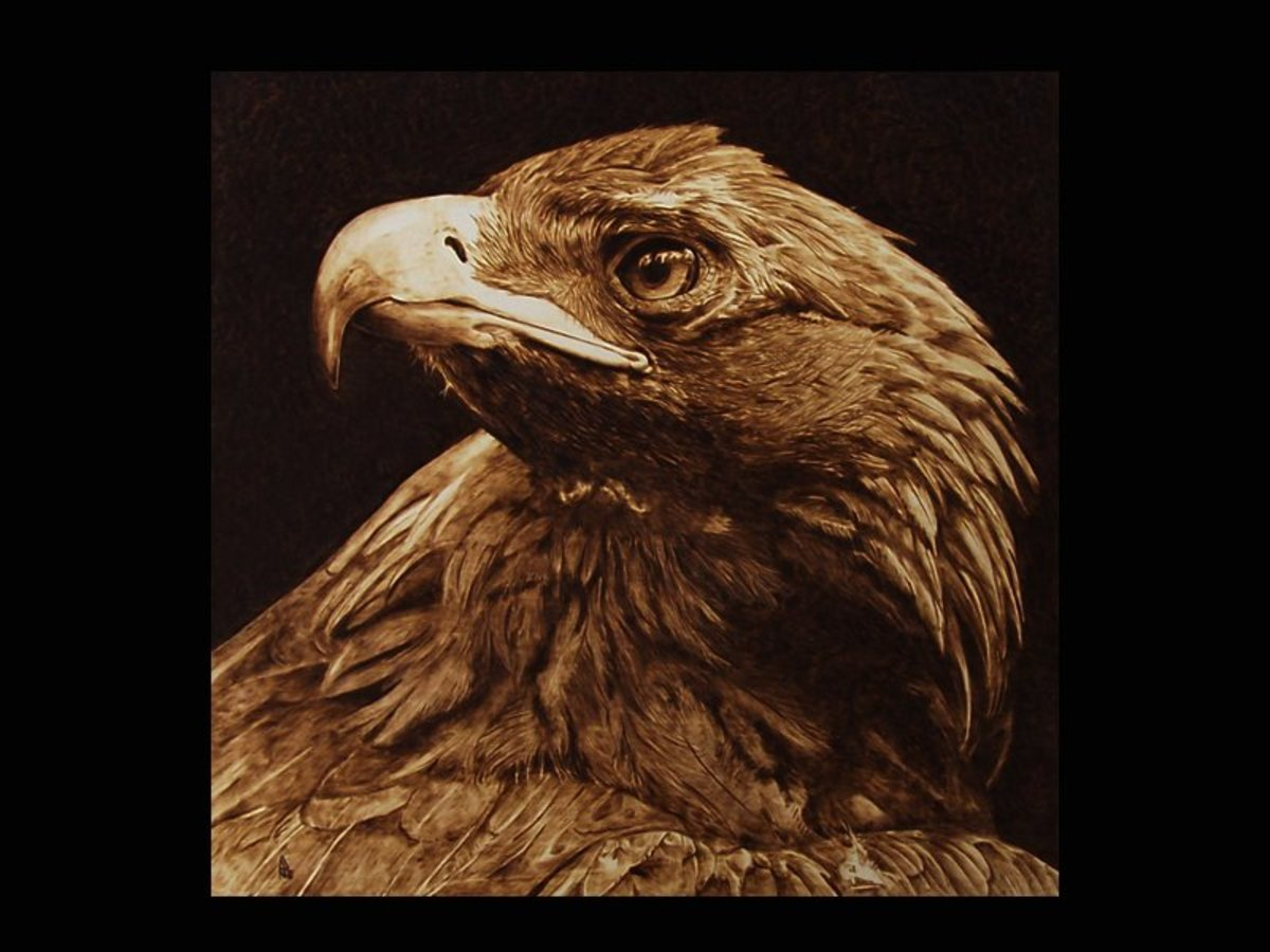 The Tawny Eagle, pyrography by Davide Della Noce
