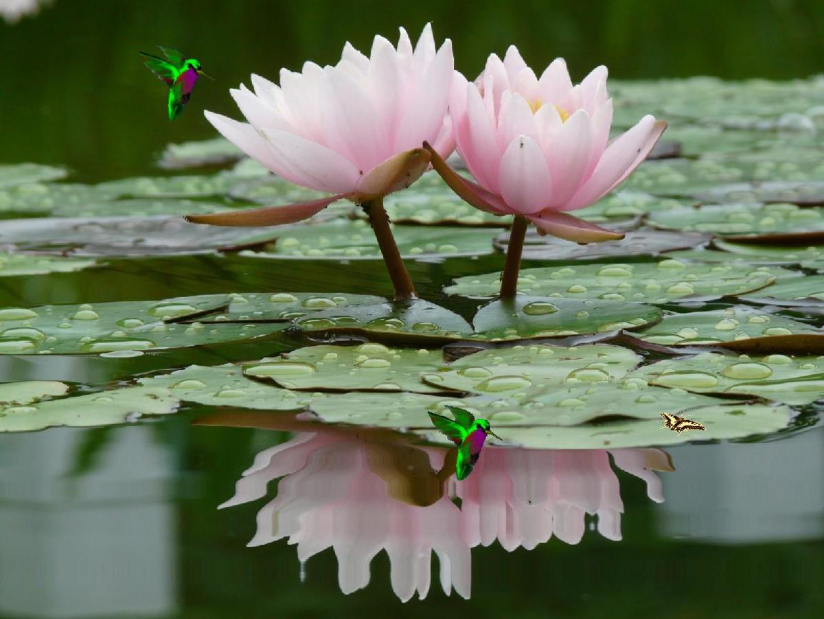 How To Make A Lotus Flower Simple Version And Origami Versions