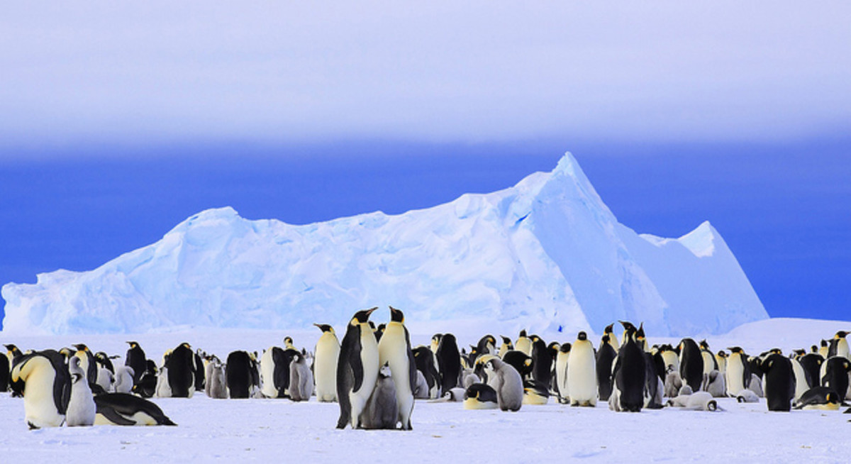 Top 10 Spectacular Birds of Antarctica
