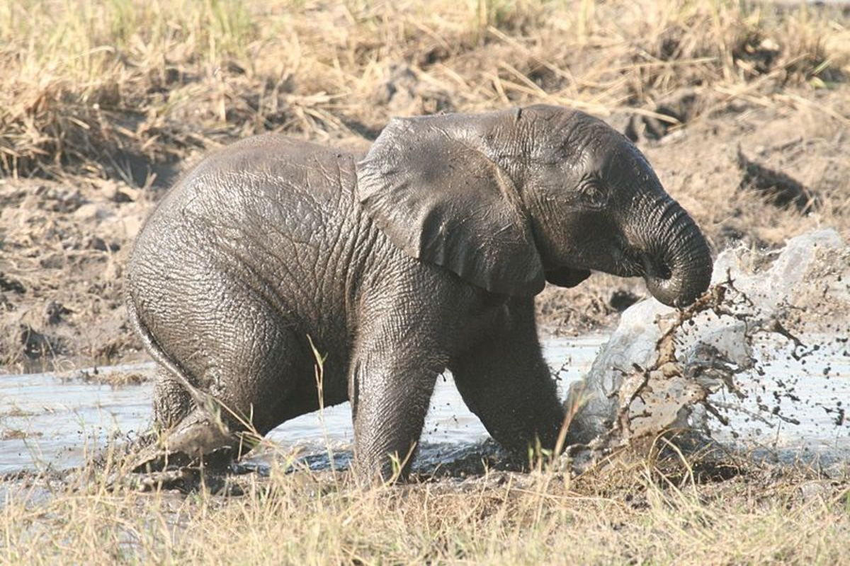 enchanting-elephants