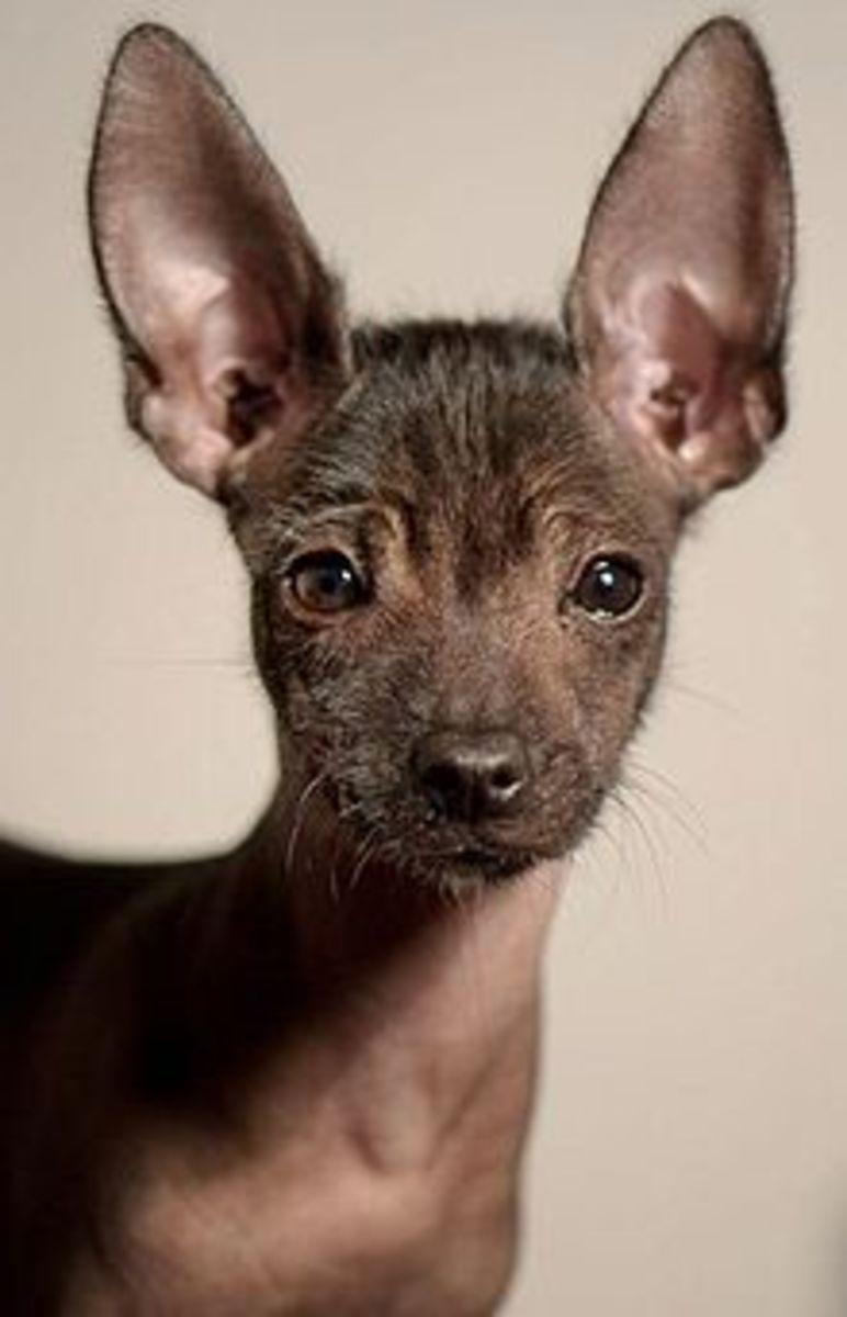 Top 10 Rare Dogs