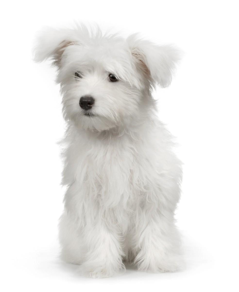 60-white-dog-names