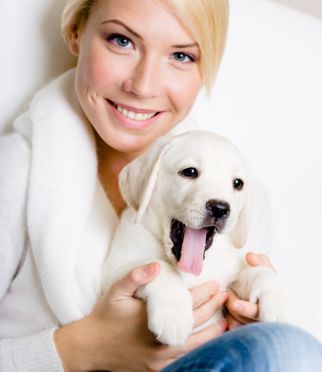 White Labrador Retriever.