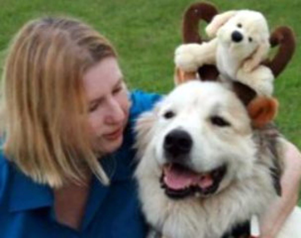 a life with dogs and dog rescue adoption