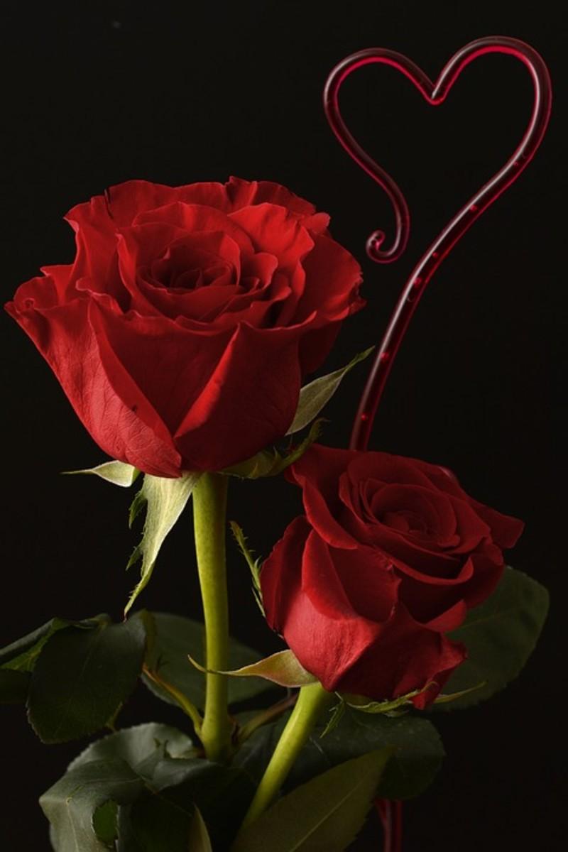 Red rose symbolizes love