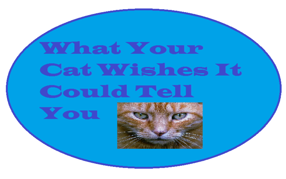 What Your Cat Wishes It Could Tell You: A Cat Confessional