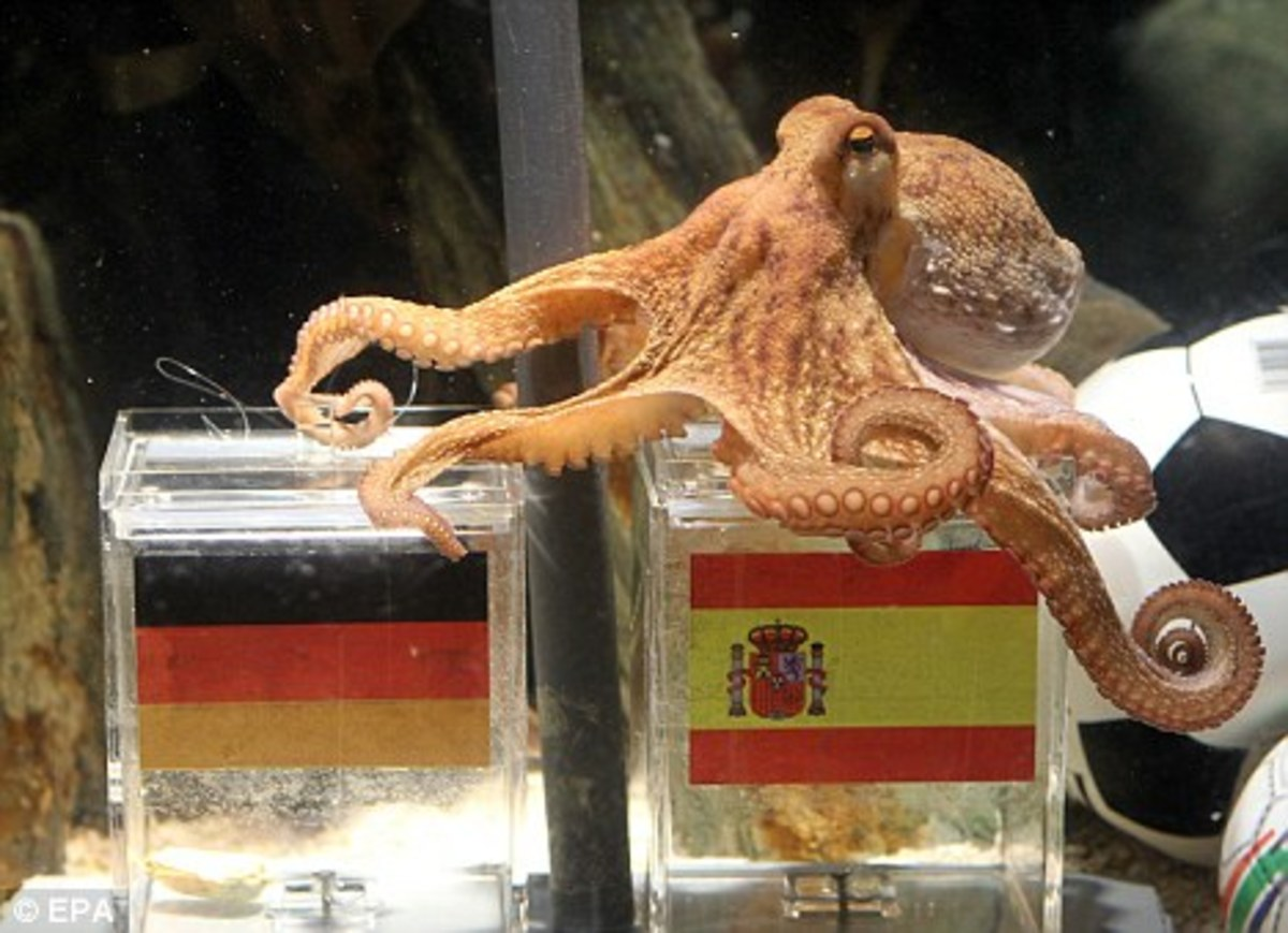 Far from being scientific Paul the psychic octopus is asked to predict soccer matches in Europe. (Seriously.)