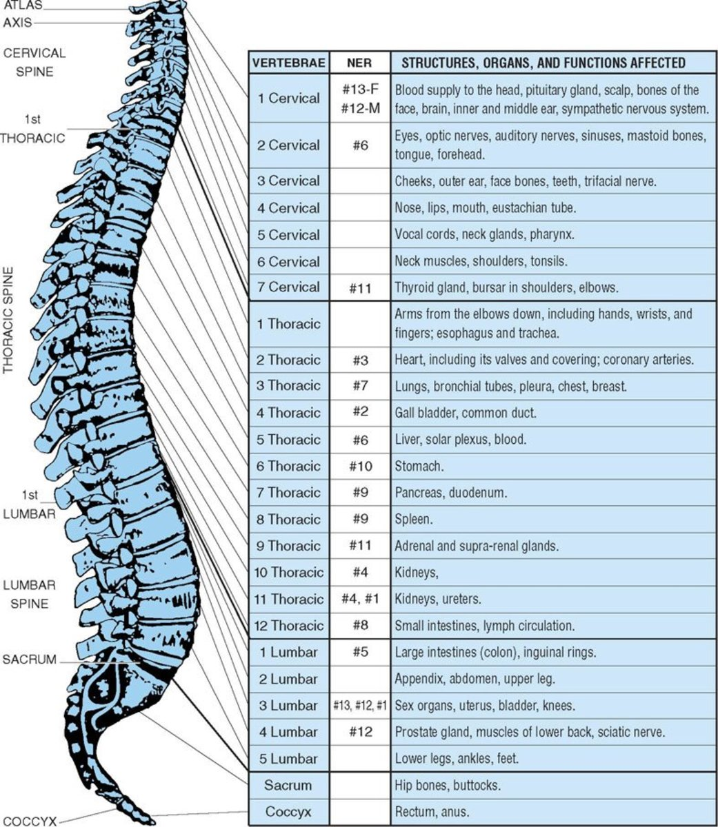 chiropractic-services-the-underrated-overlooked-medical-treatment