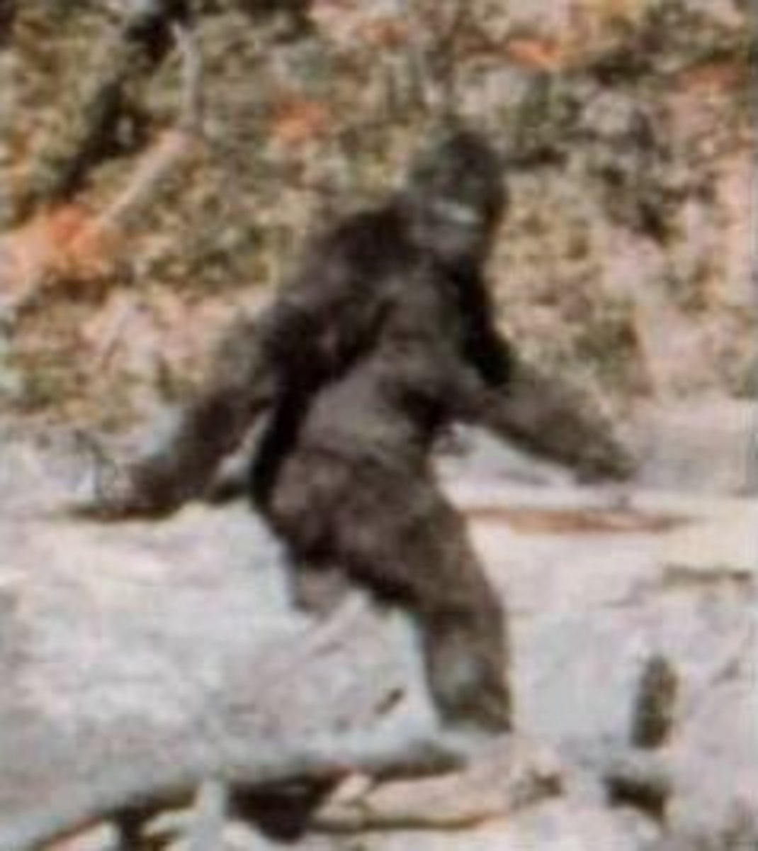 Known as the Patterson-Gimlin film, this is by far the most famous and controversial film on the subject.