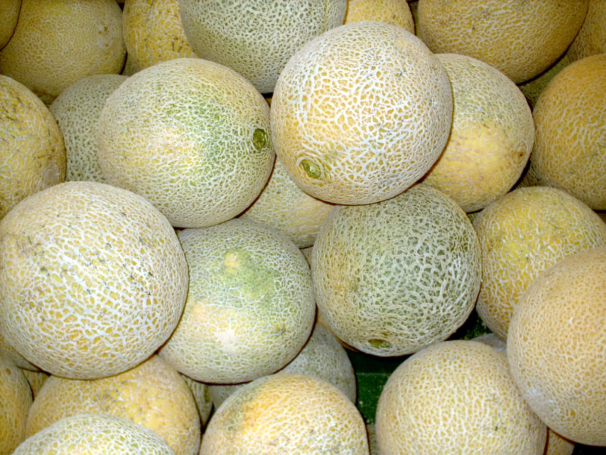 Cantaloupe from California