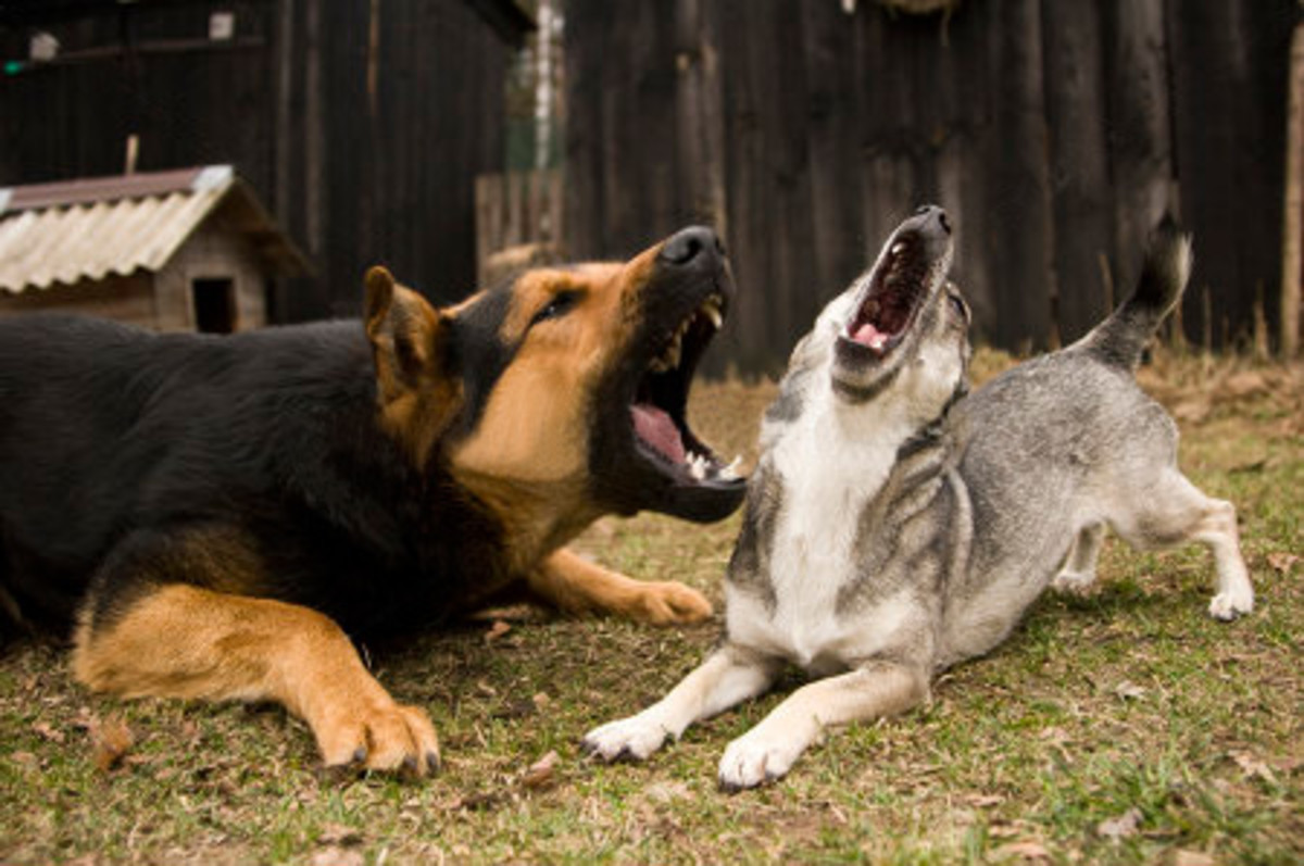 More noisy dogs that belong to bogans.