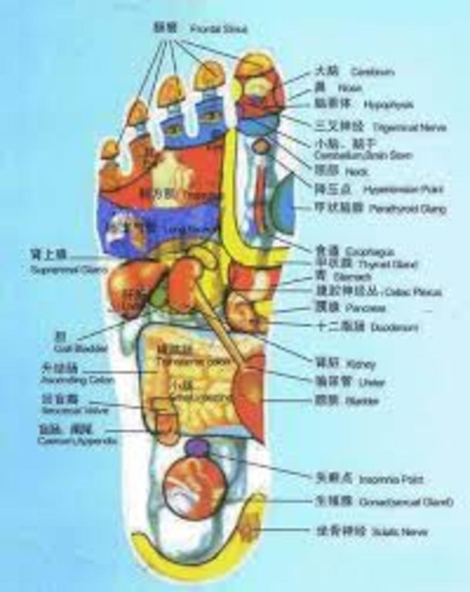All Energy Meridians are Found in the Feet