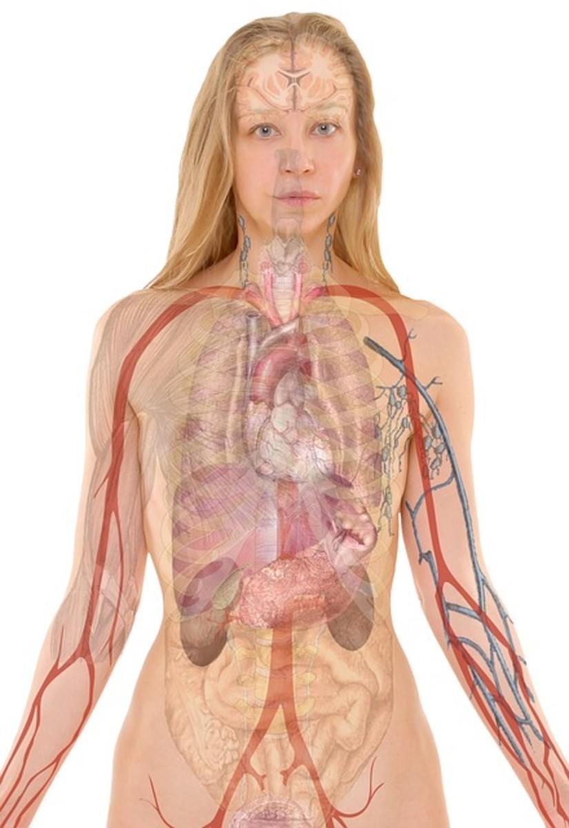 Nursing Diagnosis for Acute Renal Failure : Etiology, Pathophysiology, and Treatment