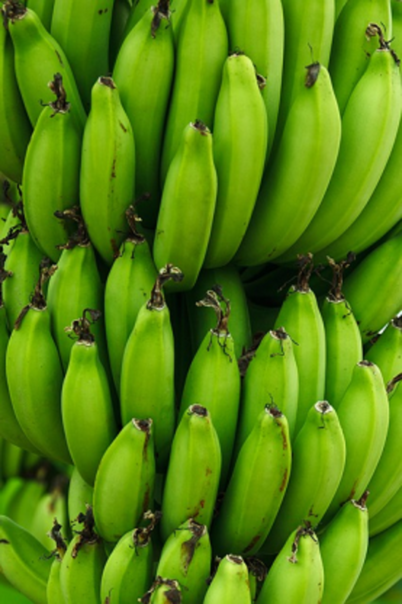 Yellow bananas will work, but bananas that are green and not yet ripened work best
