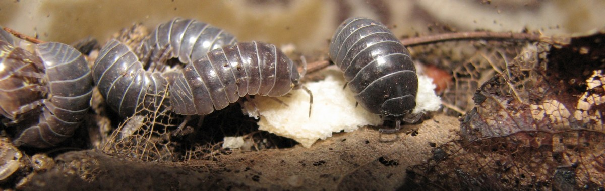 Insects are a type of arthropod. Woodlice are also arthropods but are not insects.