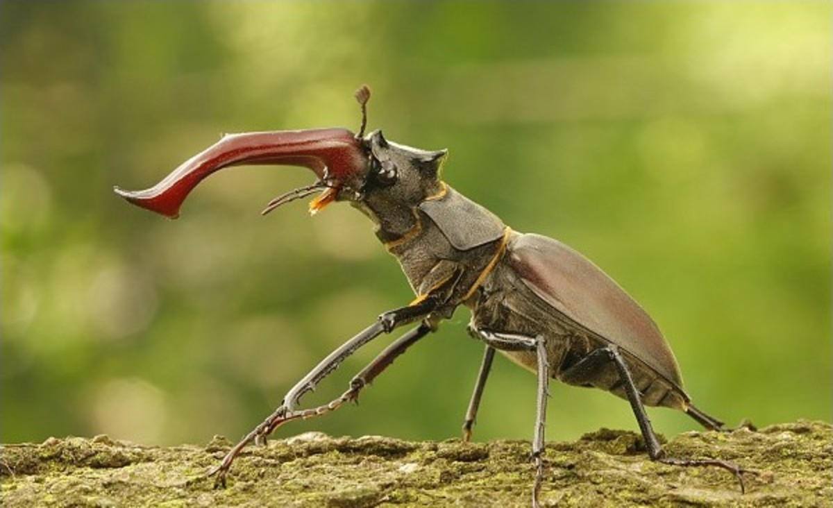 Insect Fact File – 50 Facts about Insects for Kids