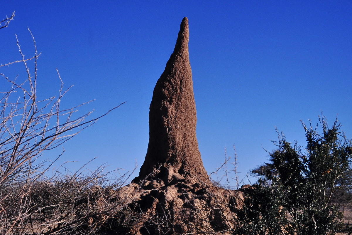 An example of a termites nest.