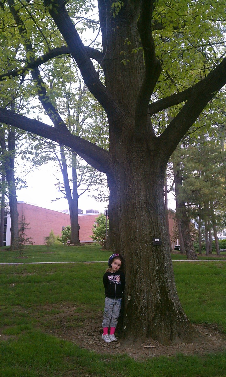 """My daughter befriending a Northern Red Oak. Her last name is """"Bush"""", and my last name translates to """"small oak"""".  She's basically an acorn."""