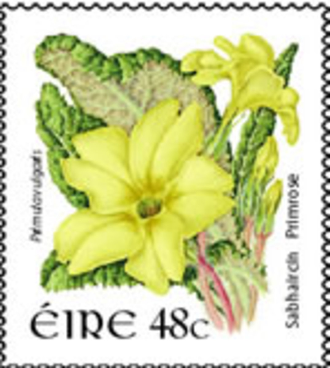 Irish postal stamp with  Eire - the original name for the Ireland which evolved from Old Irish Eriu.