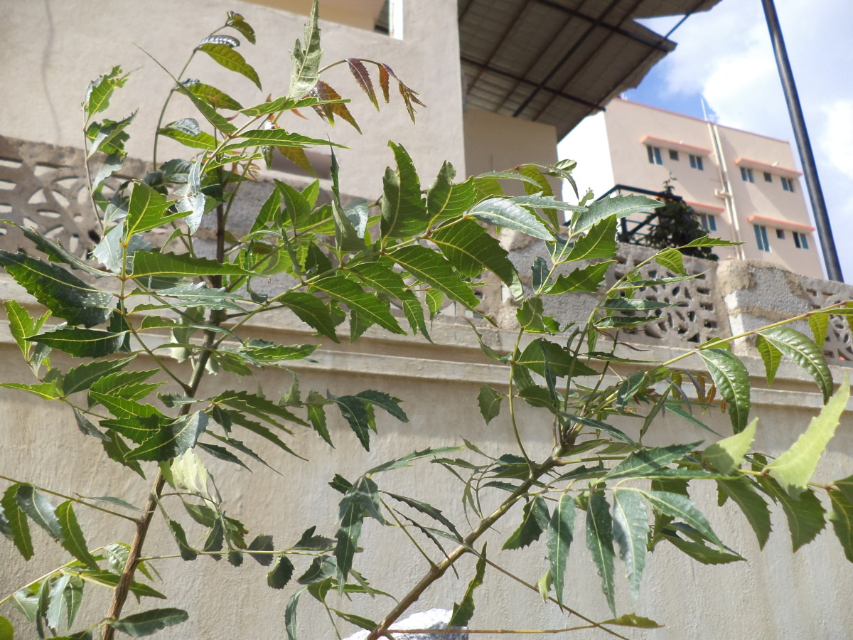 Diet and Lifestyle after Gall Bladder Removal & Controlling Blood Sugar