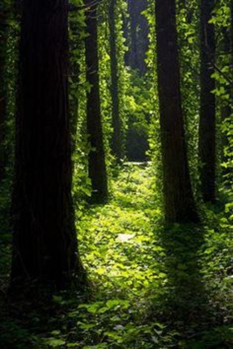 Faerie path.