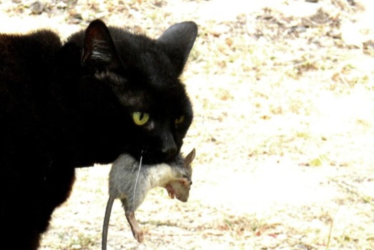A successful hunter gets his prey.