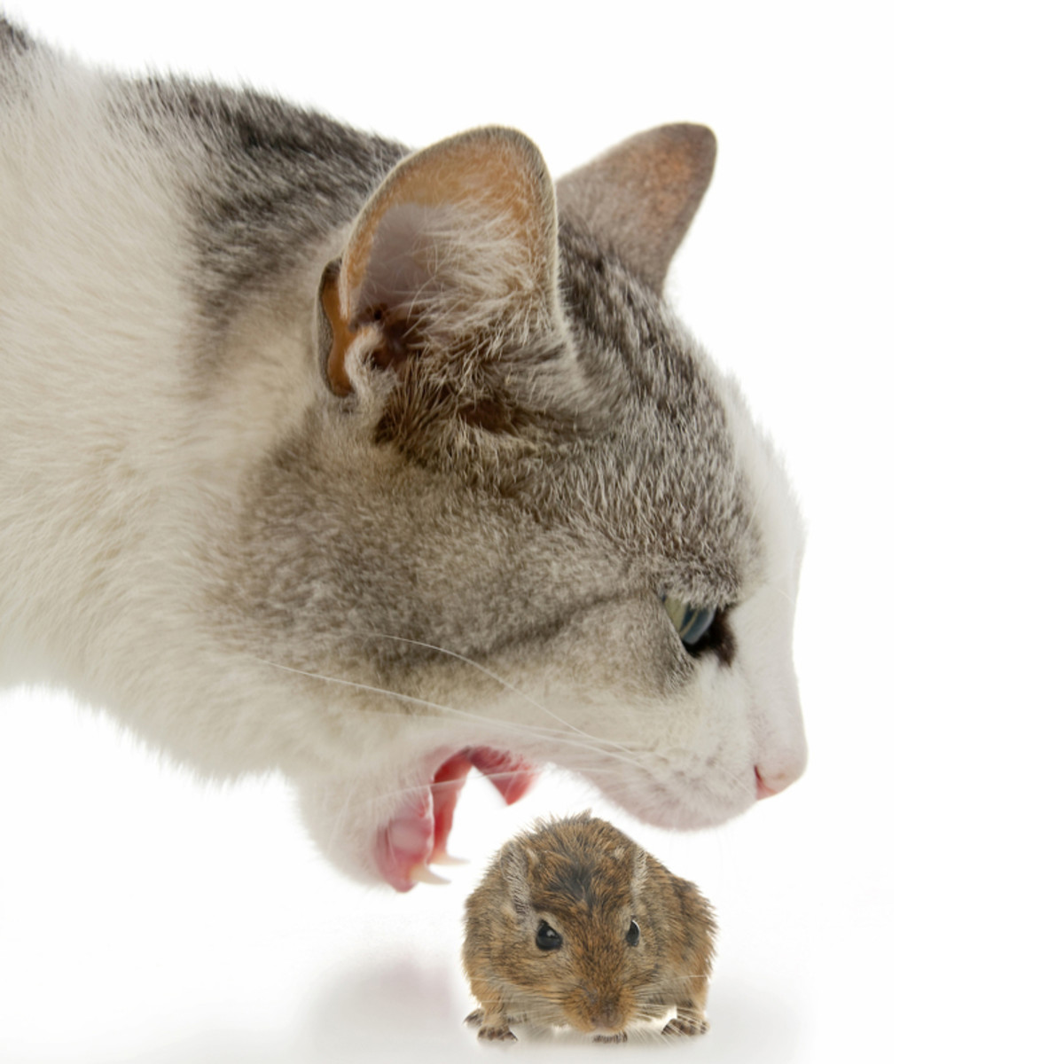 Cat Eating Computer Mouse