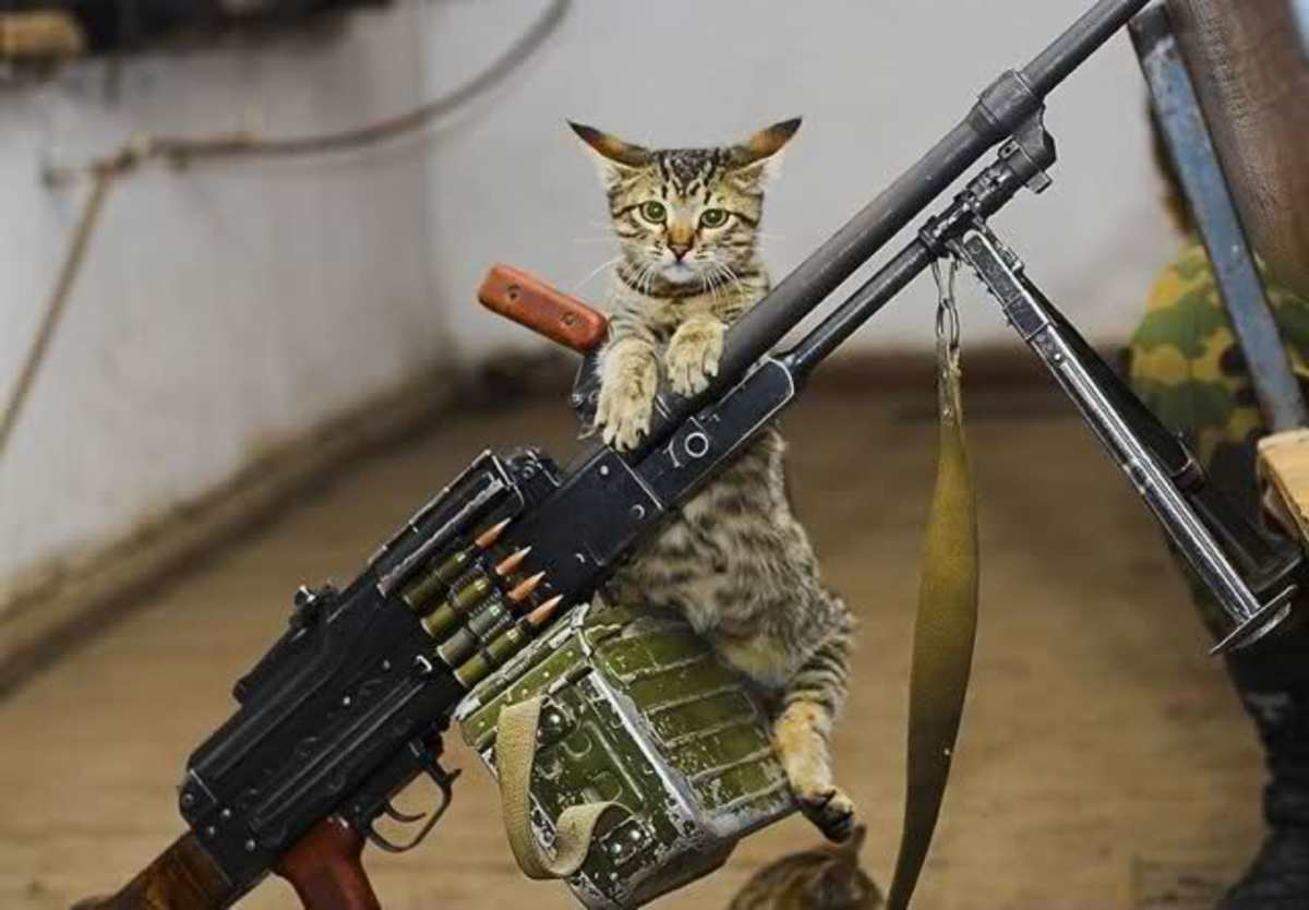 Rambo Kitty!    Just for laughs about a serious and deadly time in our history!