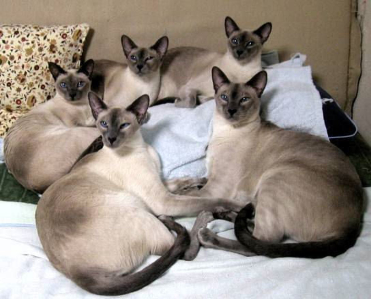 During the Black Death, these Kitties would be worth more than any amount of gold!!!!