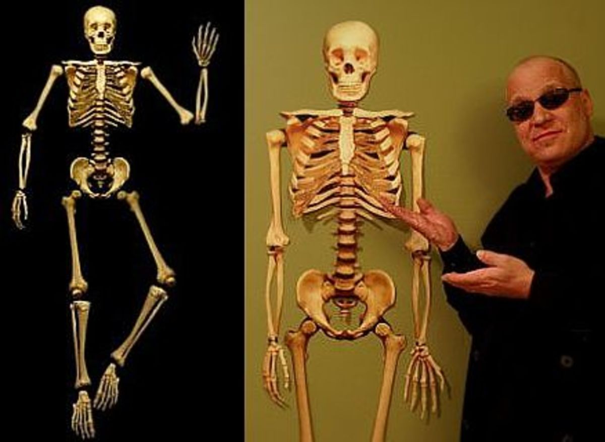 'The Human Skeleton' Paper Model @ Ravensblight