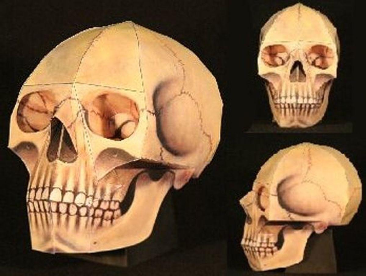 'The Human Skull' Paper Model @ Ravensblight