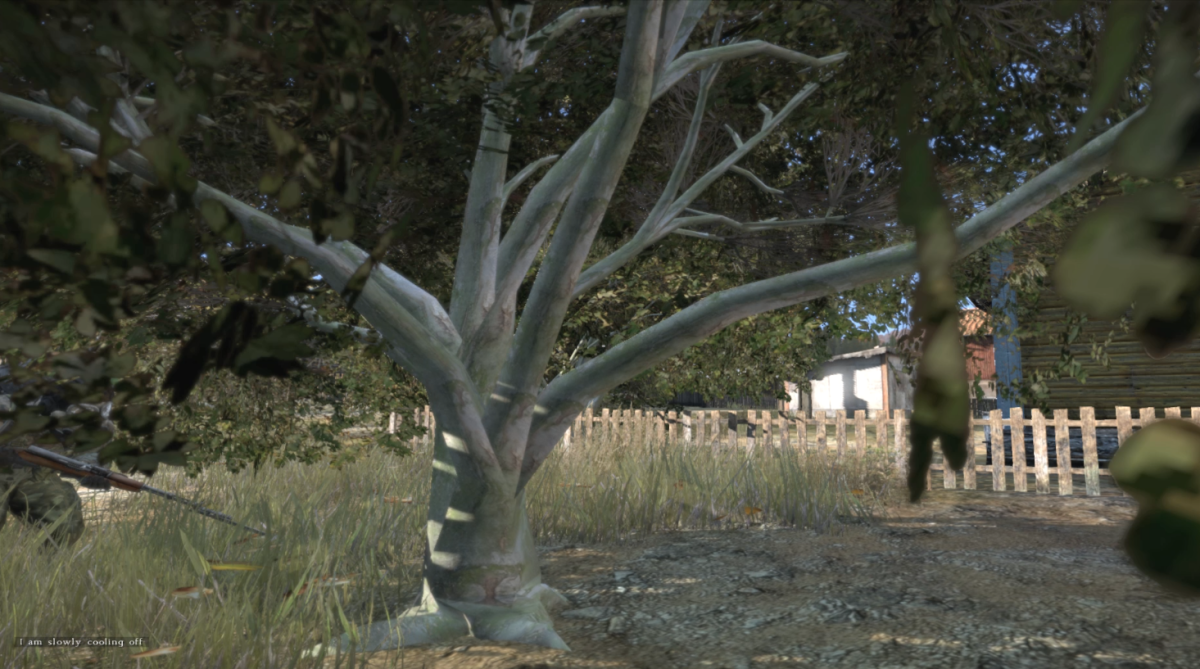 The trunk of the ashwood tree has a grey look with a visible green texture.