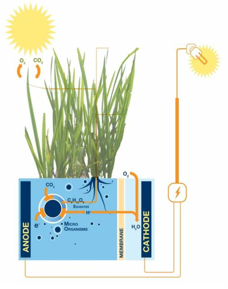 how-to-generate-electricity-from-plants