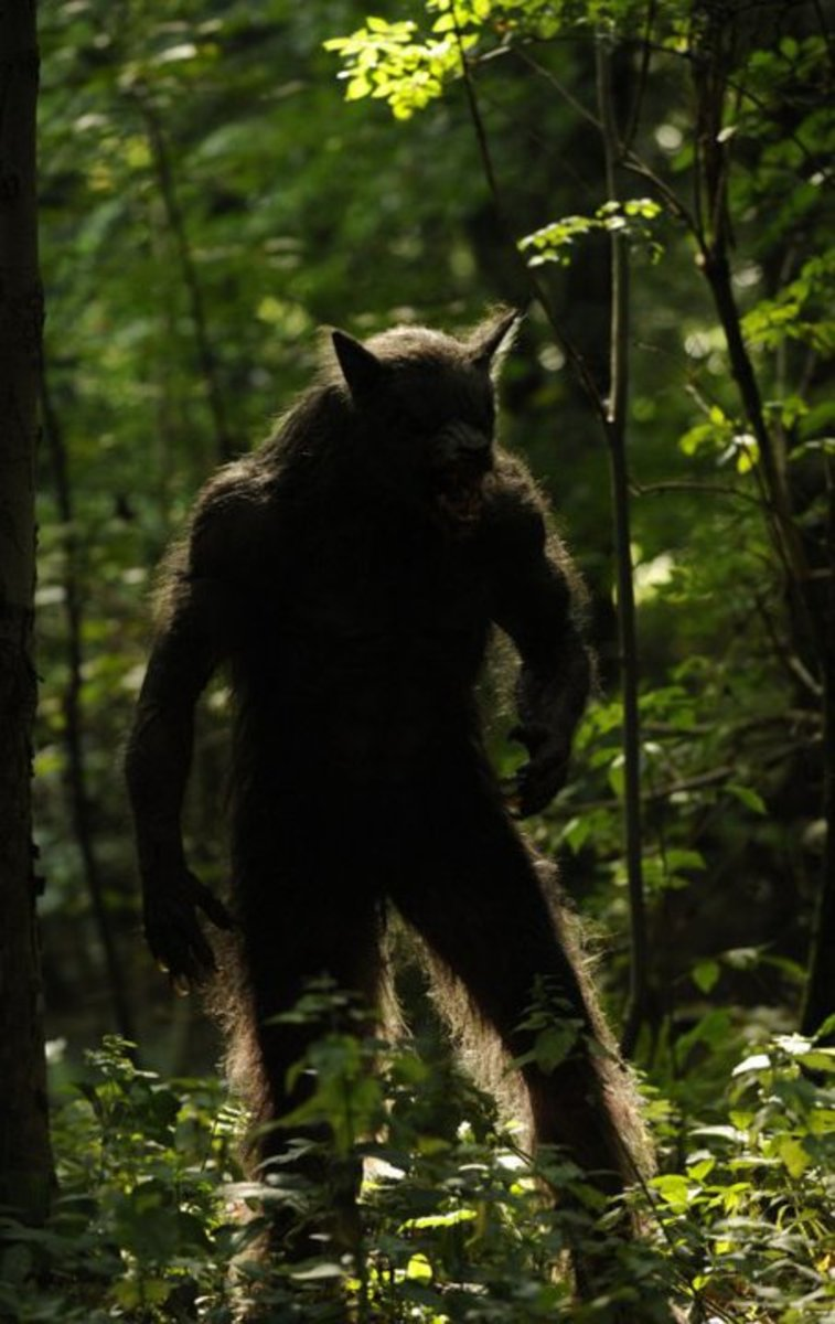 Michigan Dogman Sightings | The Gable Film