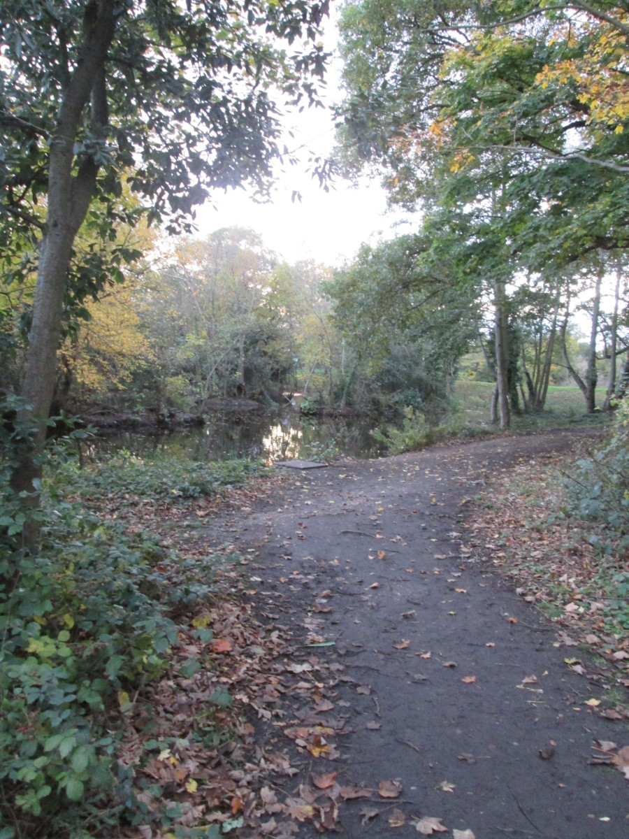 Autumnal setting beside the Perch Pond, close to the kiosk