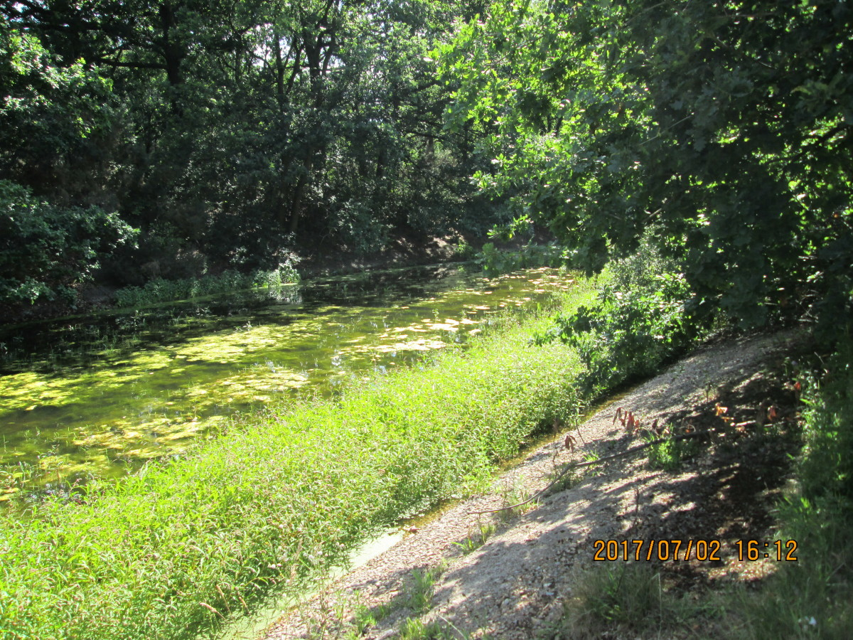 The channel between the eyot on the left and the public footpath alongside the pond has become almost completely overgrown and largely drained