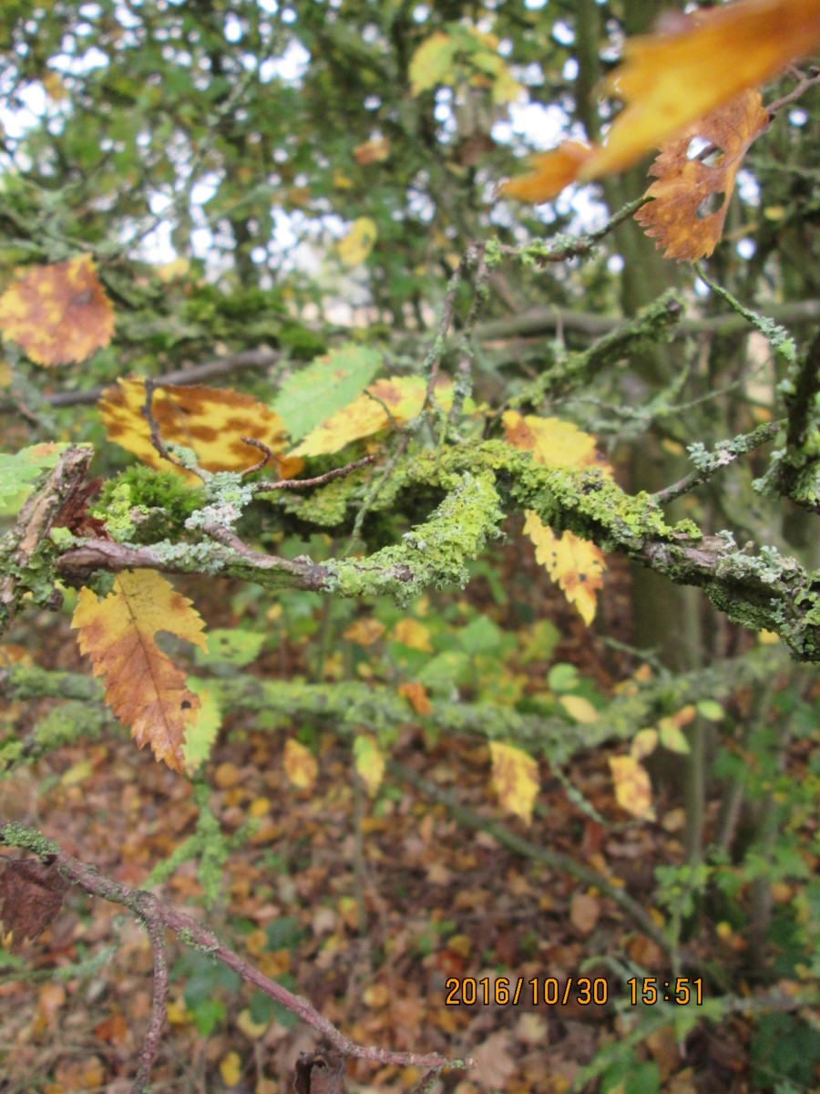 Autumn's with us, most vegetation by the Perch Pond dies back, everything's in abeyance until the sap rises again in four month's time. Some growth thrives whatever time of the year, however