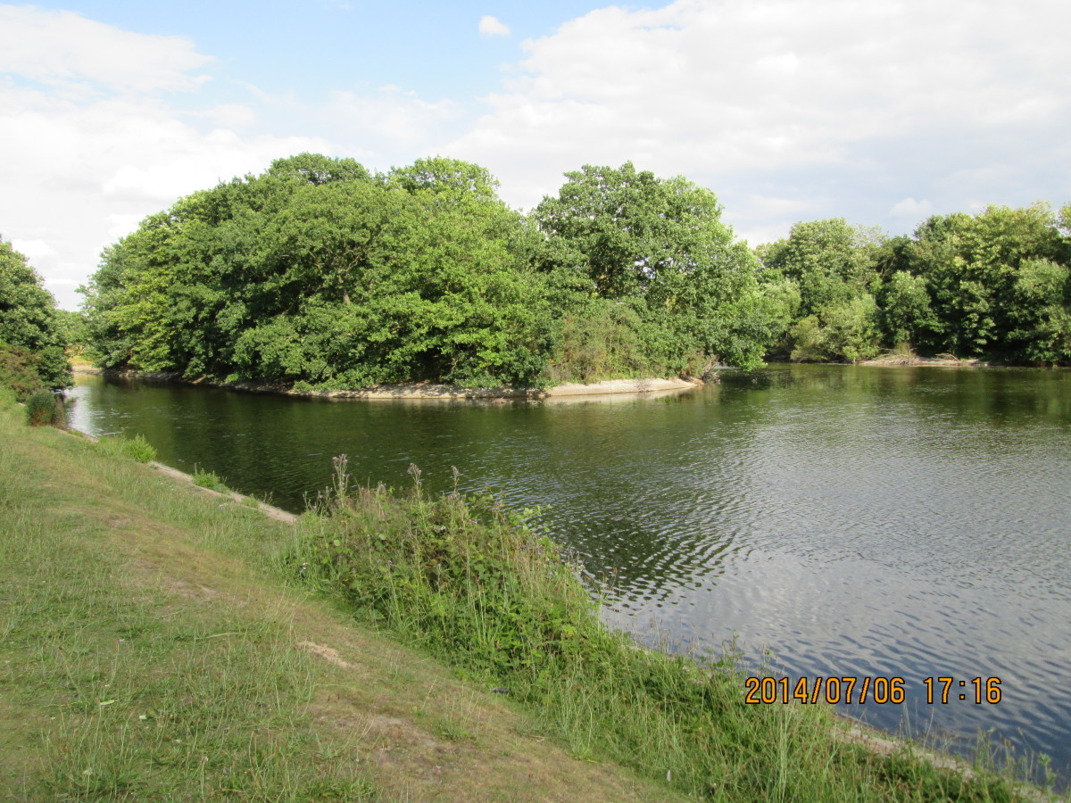One of three eyots in the Heronry Pond provides sanctuary for swans, herons, moorhens and other birdlife