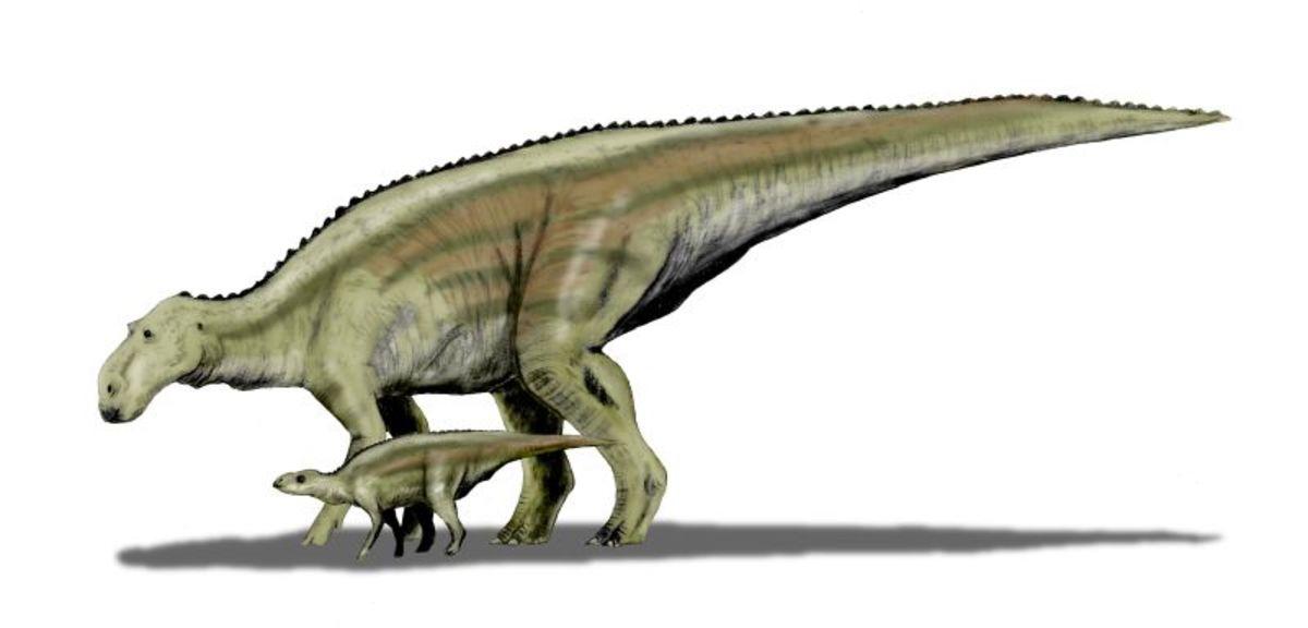 State Fossil: Duck-Billed Dinosaur [9]