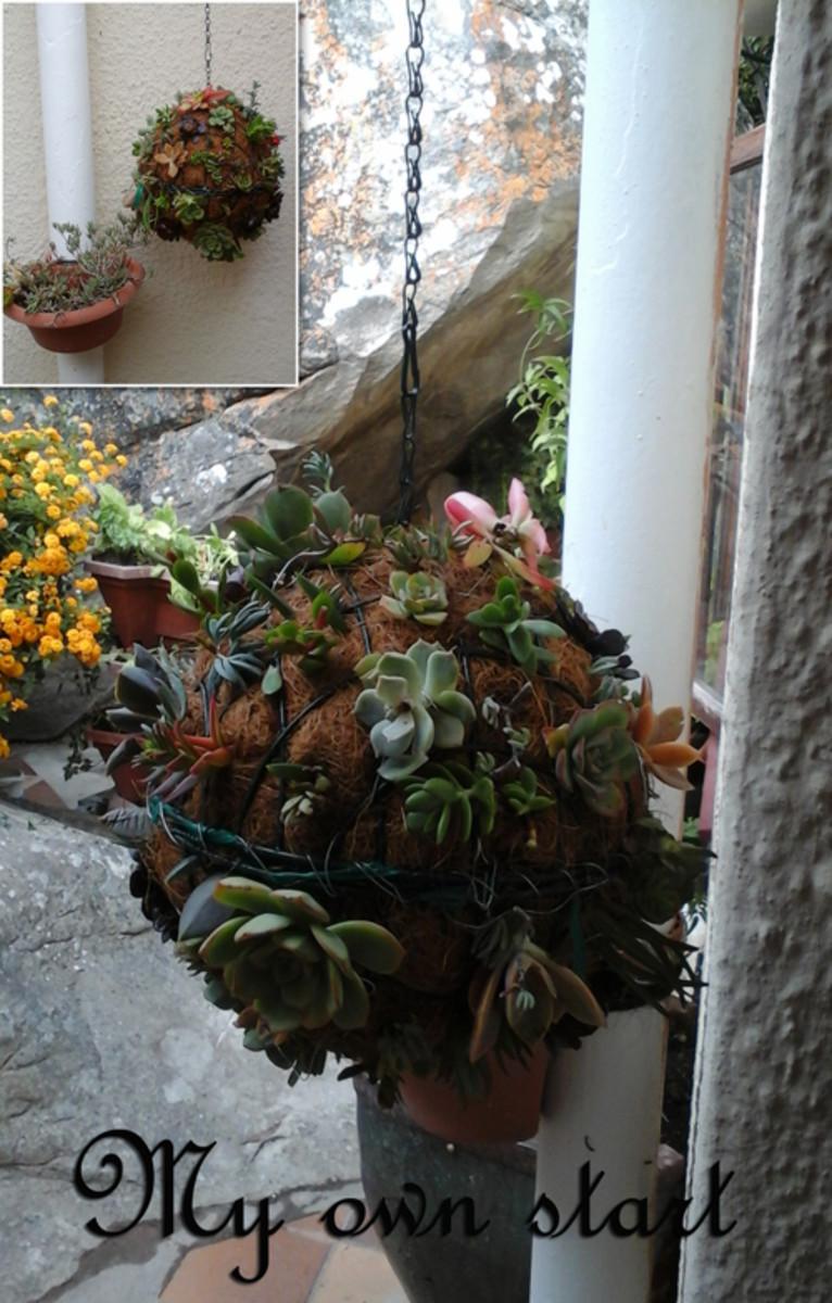 the-hanging-gardens-from-babylon