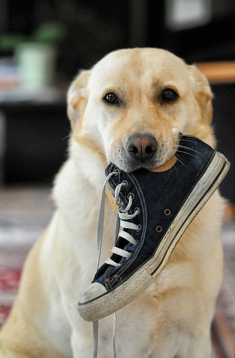 The dog ate the last person who stayed here for two weeks. Do you need a shoe dear?